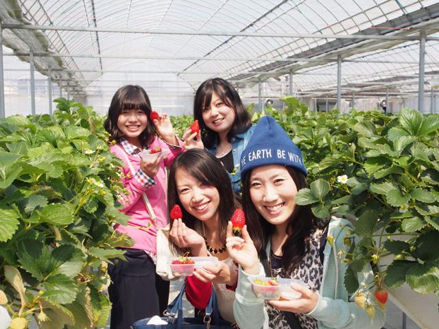 いちご農家が教える美味しいイチゴ狩りの楽しみ方★