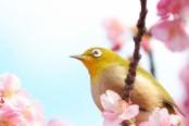 静岡県の梅園