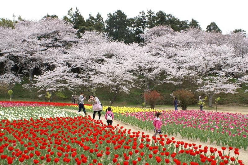 はままつフラワーパークの桜