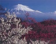 岩本山公園の梅園