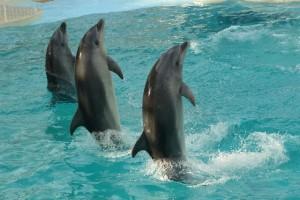 休日を120%満喫!たっぷり楽しめる水族館&動物園 in 静岡