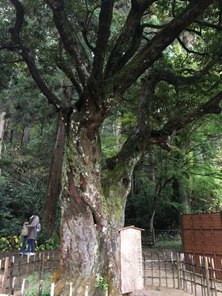 縁結びの木「ひょうの木」