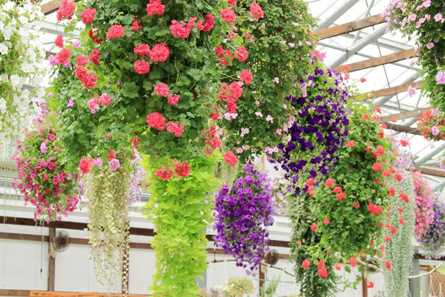 掛川花鳥園:バイキングの花