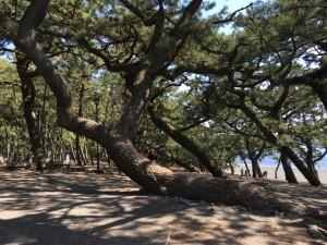 日本三大松原のひとつ「三保の松原」で天女に会えるのか?