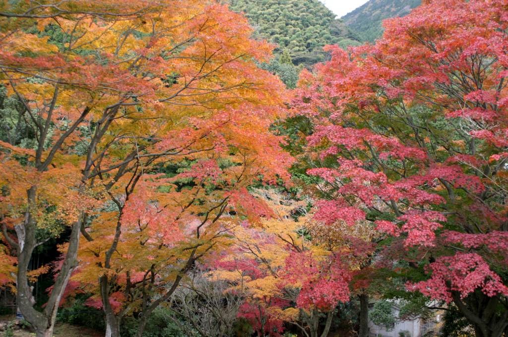 伊東市 丸山公園の紅葉