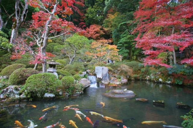 伊豆 修禅寺庭園:紅葉