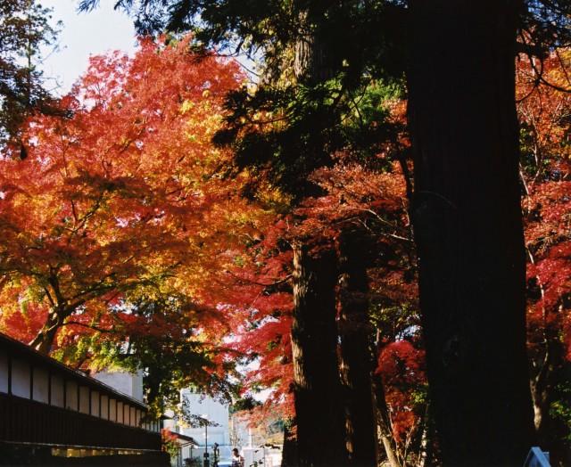 三島市:玉澤妙法蓮華寺の紅葉