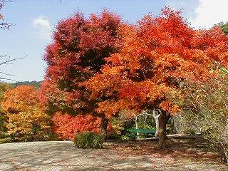 熱海市 姫の沢公園:紅葉