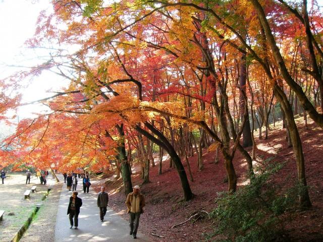伊豆市修善寺自然公園:紅葉