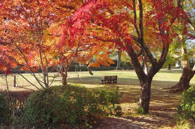 鳥羽山公園の紅葉