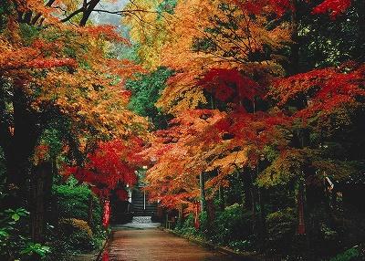 油山寺の紅葉