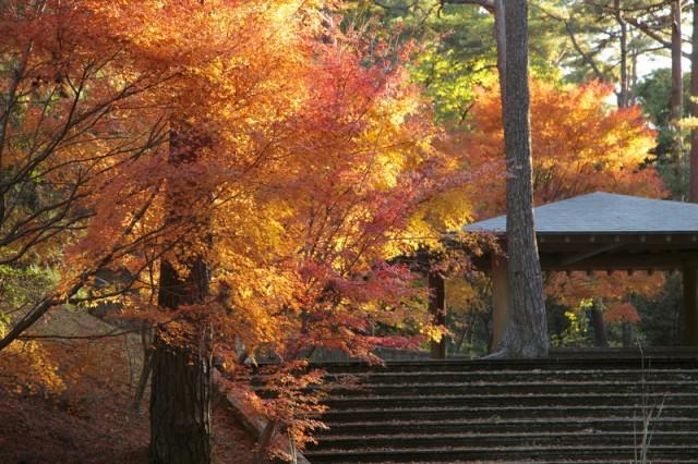 浜北森林公園の紅葉