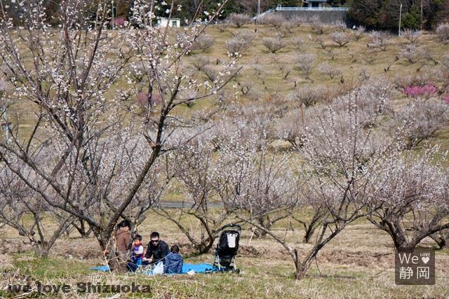 豊岡梅園でピクニック