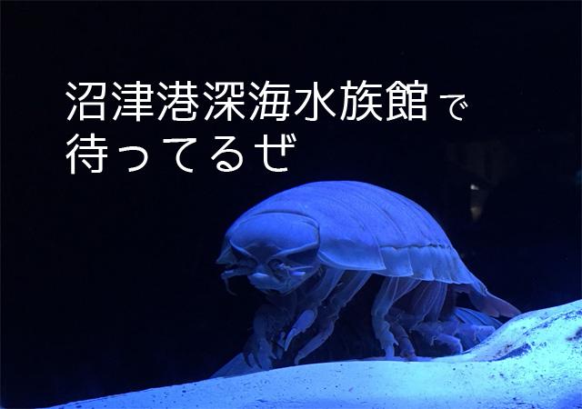 絶対見ておきたい!沼津港深海水族館