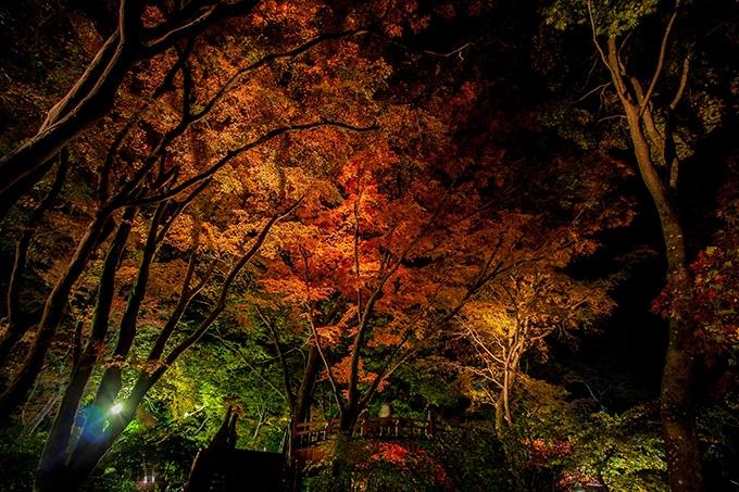 熱海梅園の紅葉ライトアップ