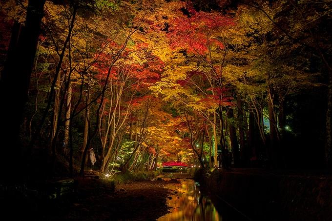 小國神社の紅葉ライトアップ