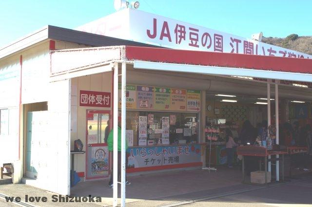 静岡県東部 伊豆の国市江間いちご狩り