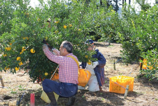 農家×ベンチャー企業の地方創生プロジェクト