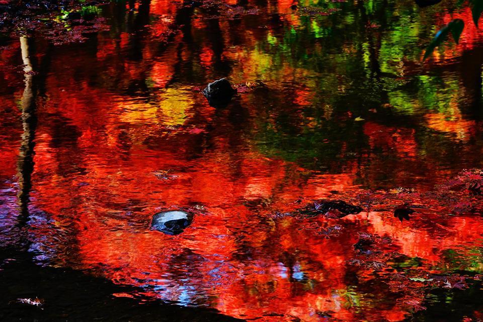 小國神社の紅葉