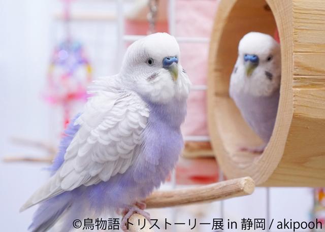 鳥物語トリストーリー展 in 静岡