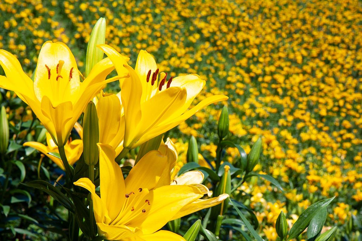 袋井神社の花巡り