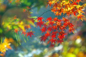 【伊豆市】修善寺自然公園「もみじ林」露天市