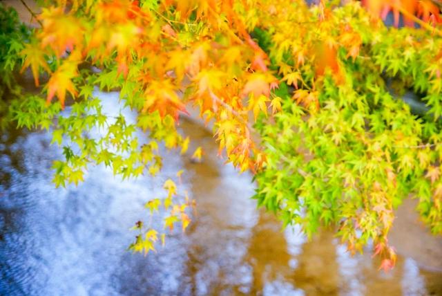 【伊豆市】~東海第一園~修禅寺庭園「秋の特別公開」