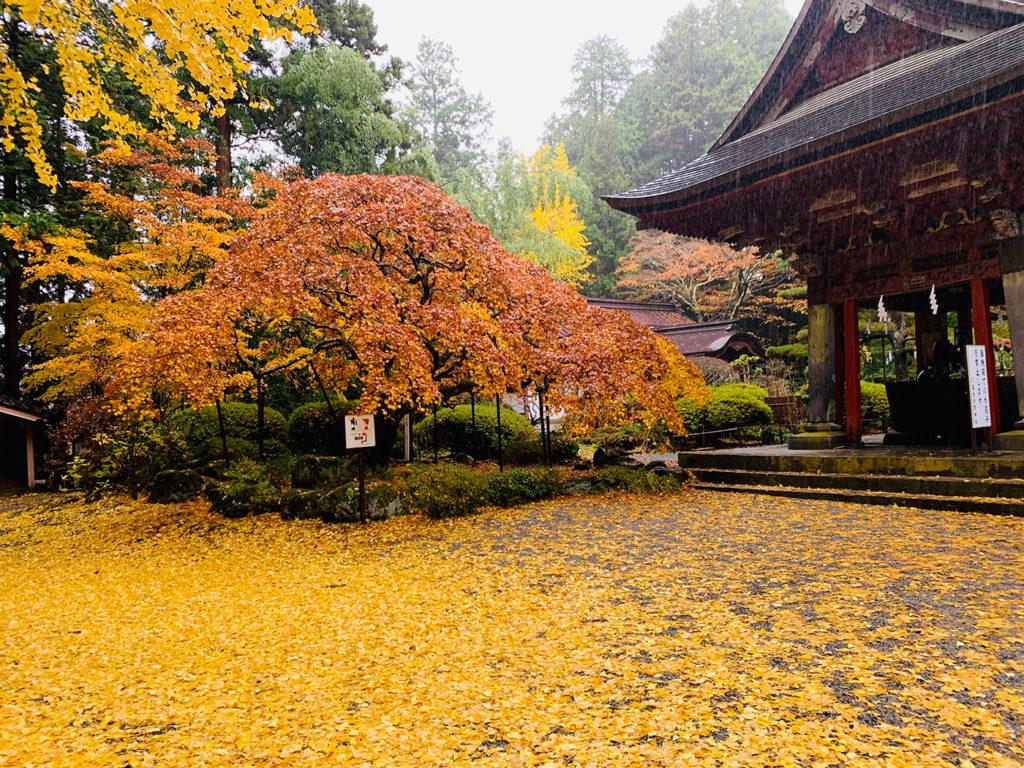 北口本宮冨士浅間神社:紅葉:イチョウの絨毯