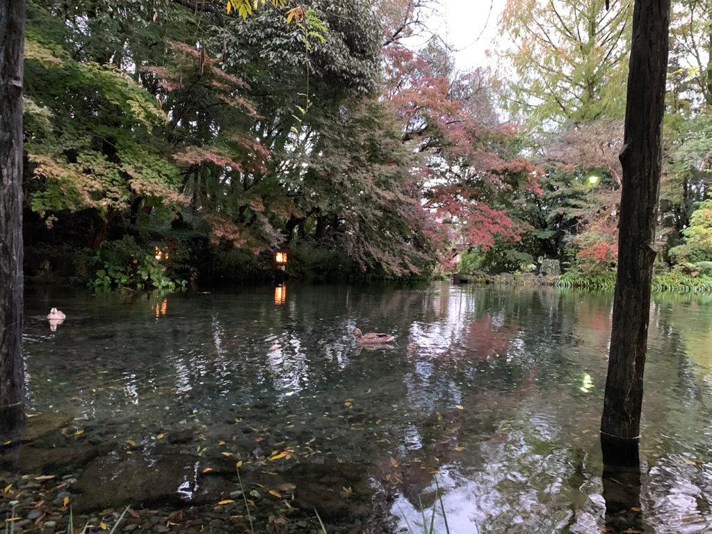 富士山本宮浅間神社:湧玉池