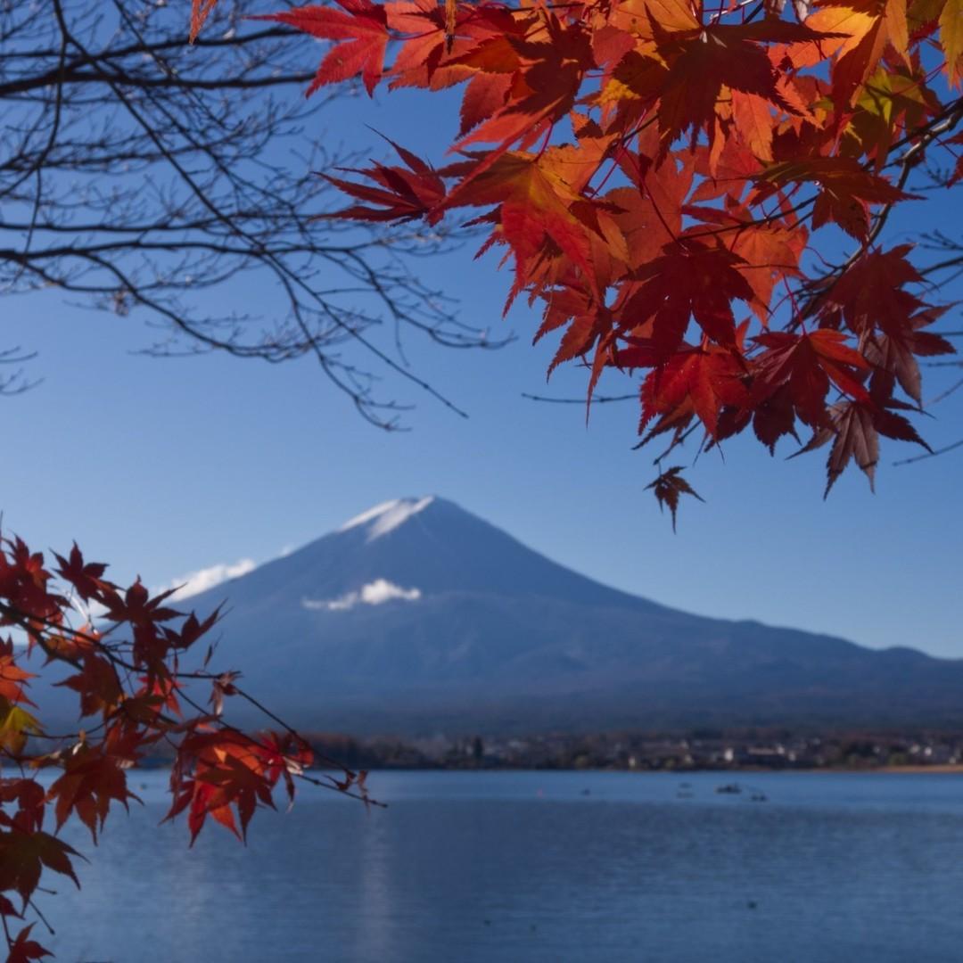 河口湖の紅葉と富士山