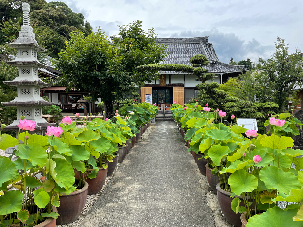 桔梗寺の蓮の花
