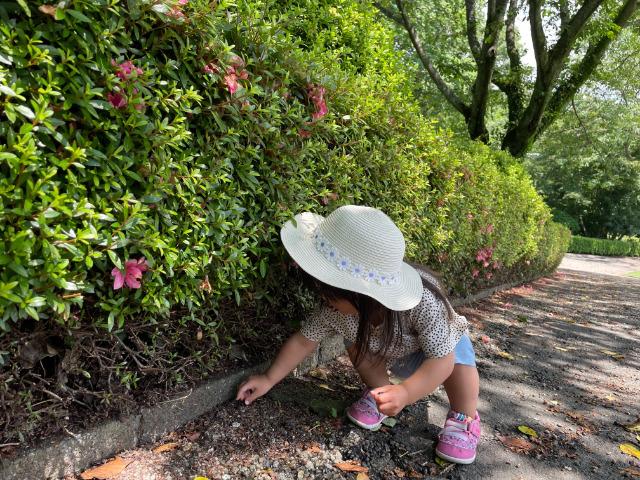 富士市:岩本山公園